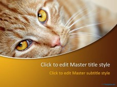 10039-01-red-cat-ppt-template-1