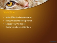 10039-01-red-cat-ppt-template-2