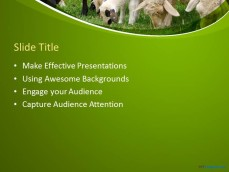 10060-01-sheeps-ppt-template-2