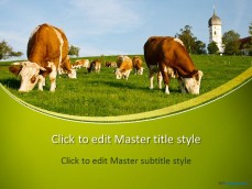 10175-cows-ppt-template-0001-1