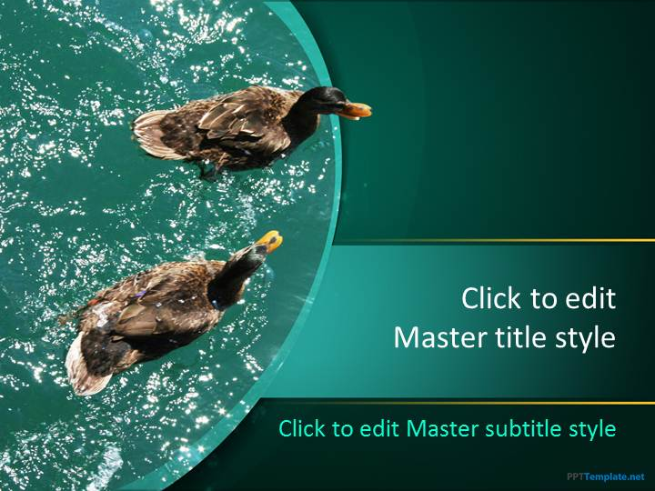 Free Duck PPT Template