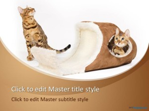 Free Cat Bed PPT Template