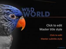 Free zoo ppt templates ppt template 10378 bird ppt template 0001 1 toneelgroepblik Images